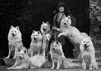 Lady with Samoyeds